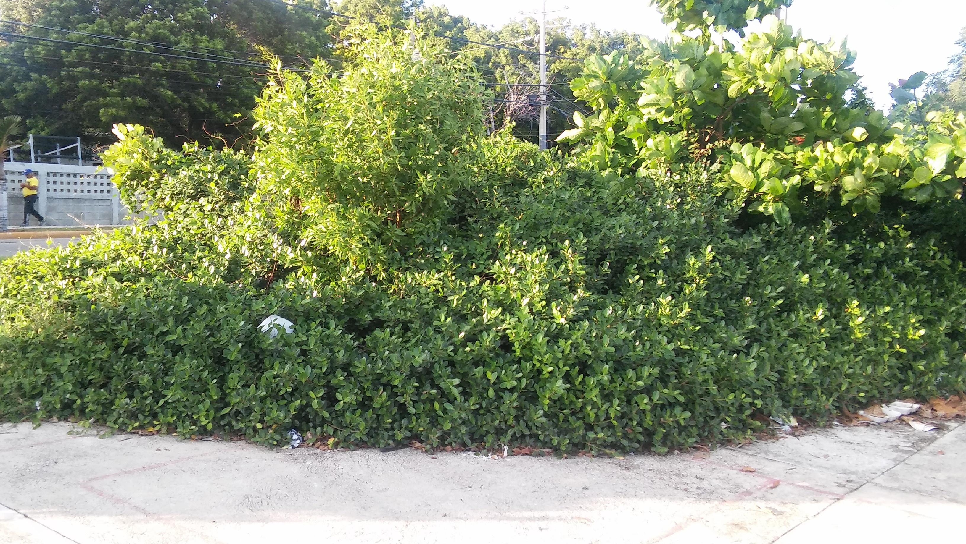 Bulevar 1